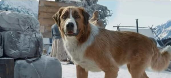 Пёс Бак