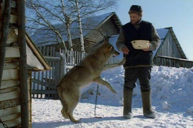 Фильм Весьегонская волчица