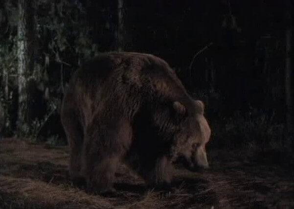 Фильм Дикий гризли (2000 год)