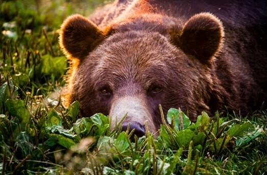 Лучшие фильмы про медведя