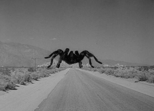Фильм Тарантул (1955 год)