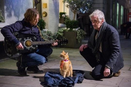 Фильм Уличный кот по кличке Боб (2016 год)